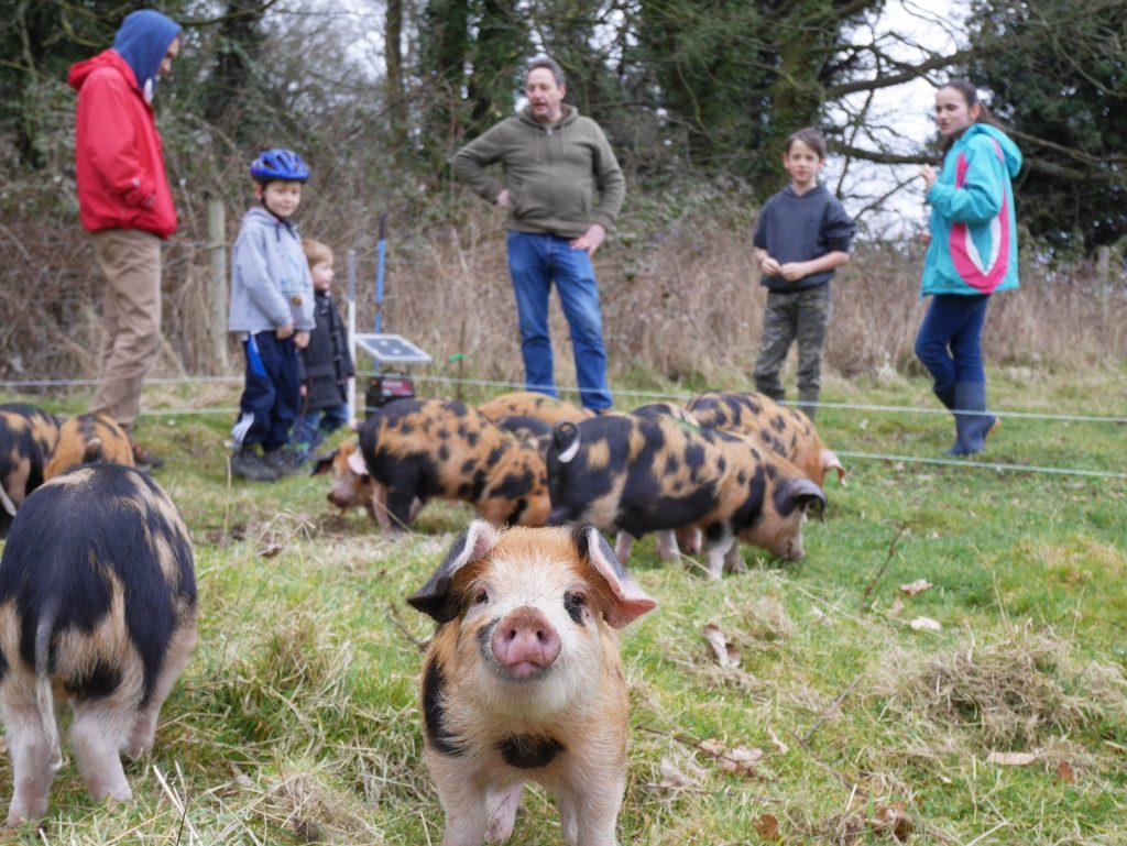 Marton Pig Club